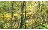 Creek Frontage! This property isnt far from town yet has privacy, woods, garden areas, seasonal mountain views and a nice flowing creek! 11.67 acres in the north Georgia mountains.See attachment for P