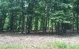 Almost 12 acres of beautiful & gentle terrain. Property borders USFS! Wooded for good privacy. Natural spring on property. No steeps roads and great paved access! Unrestricted so bring your camper or
