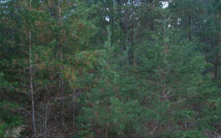 237000 Ellijay Vacant Lot