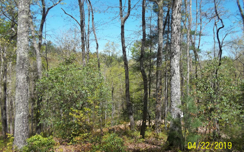 287600 Morganton Vacant Lot