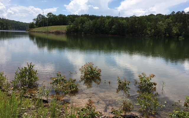 269101 Blairsville Lake Front Lot