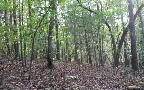 246302 Ellijay River Access Lot