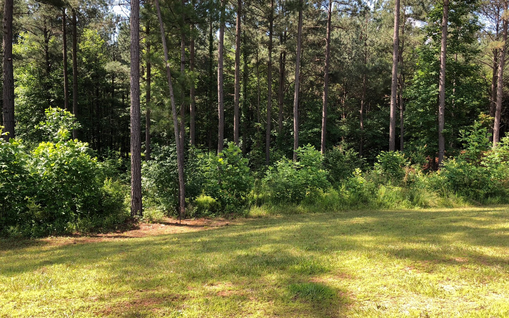 278905 Blairsville Vacant Lot