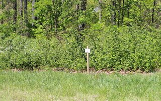 279505 Blairsville Vacant Lot