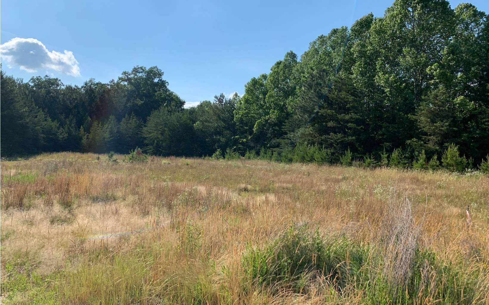 297705 Blue Ridge Commercial Lot