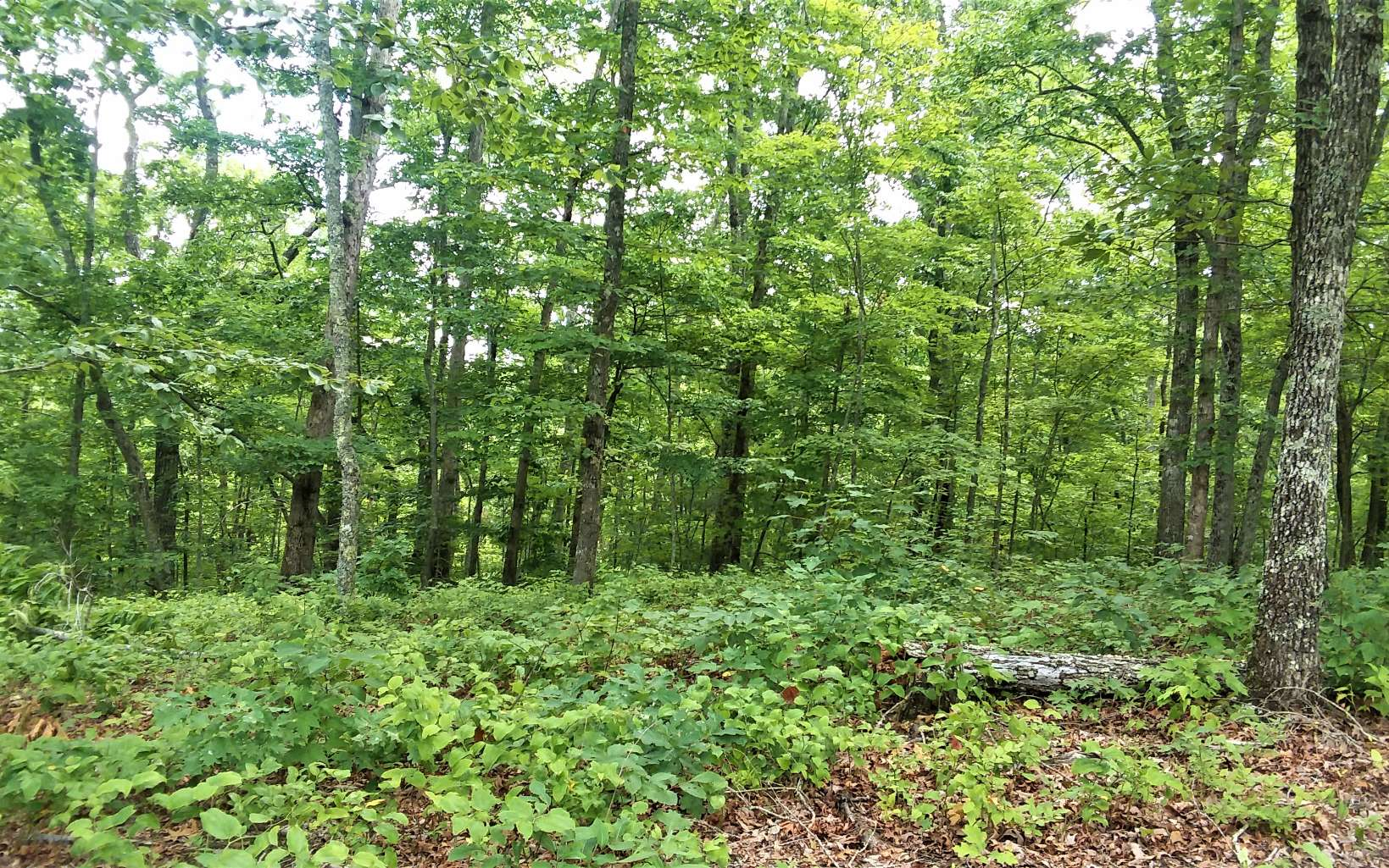 290106 Ellijay Vacant Lot