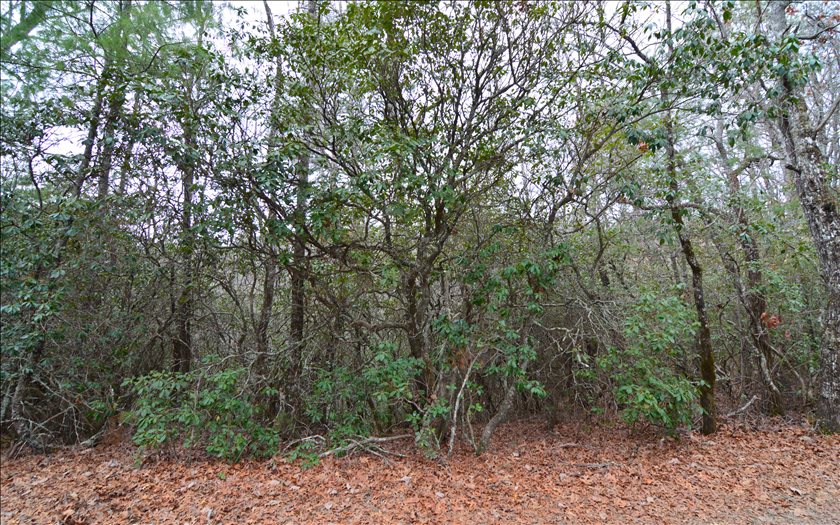 275409 Hayesville Vacant Lot