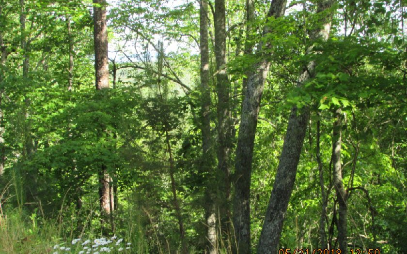 278211 Ellijay Vacant Lot