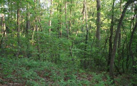 229116 Ellijay Vacant Lot