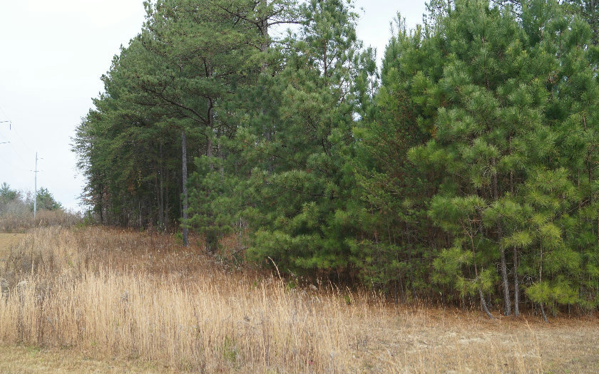 257517 Blairsville Vacant Lot
