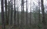 276917 Blue Ridge Acreage