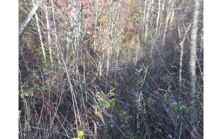 263718 Ellijay Vacant Lot