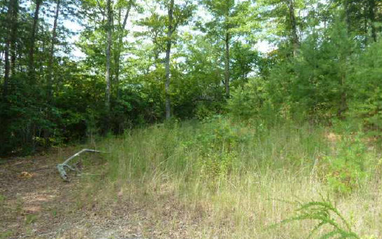252920 Hayesville Vacant Lot