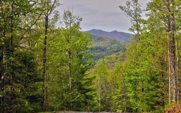 274721 Hayesville Vacant Lot