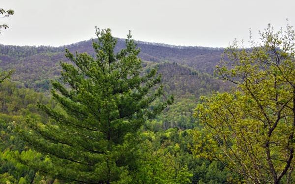 274722 Hayesville Vacant Lot