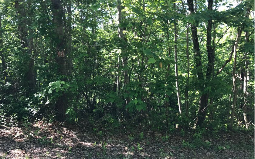 267425 Hayesville Vacant Lot