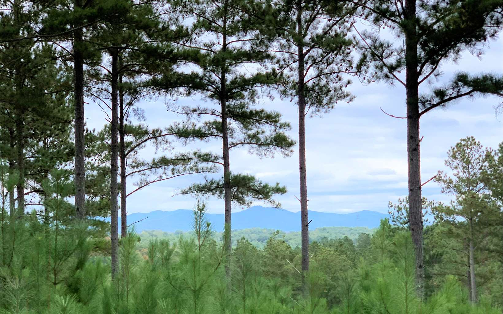296626 Blairsville Lake Access Lot