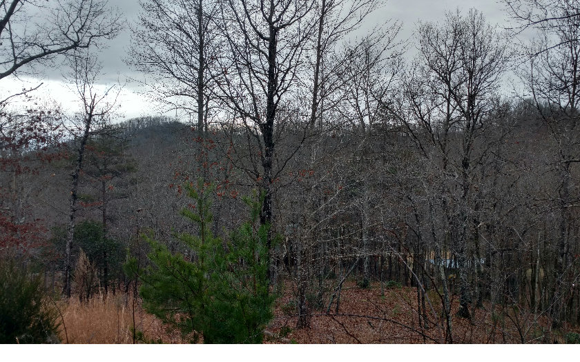 254430 Hayesville Vacant Lot
