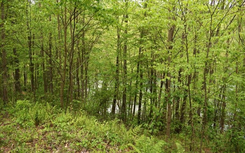 278431 Topton Lake Front Lot