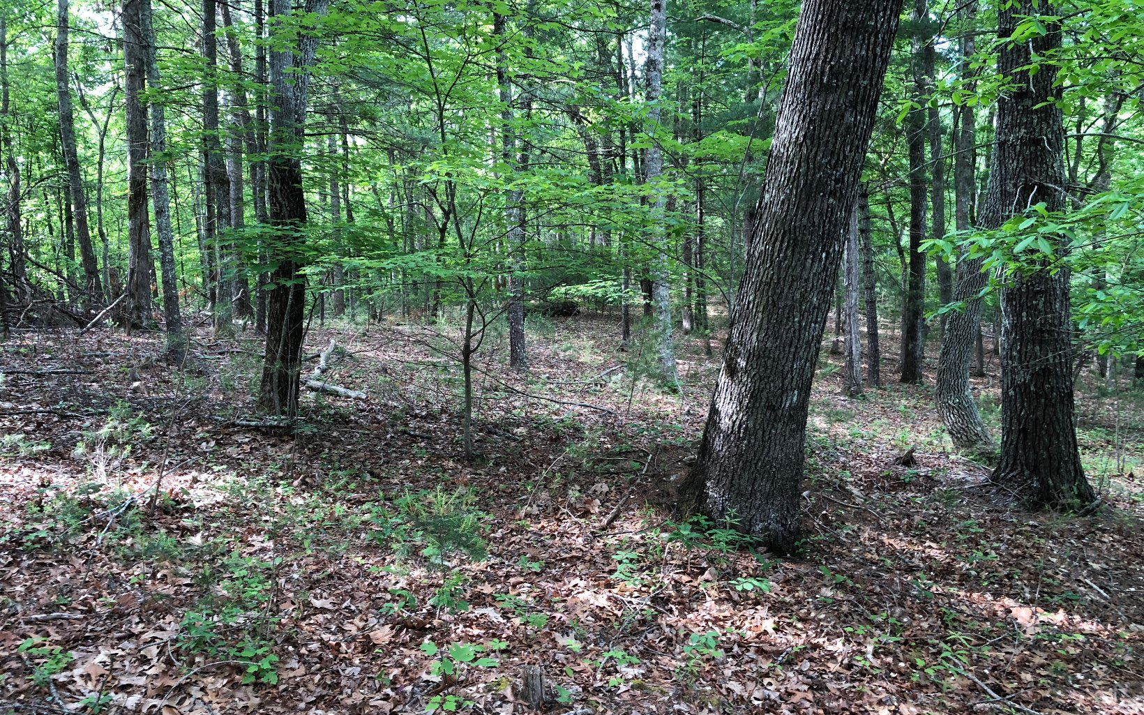278032 Blairsville Vacant Lot