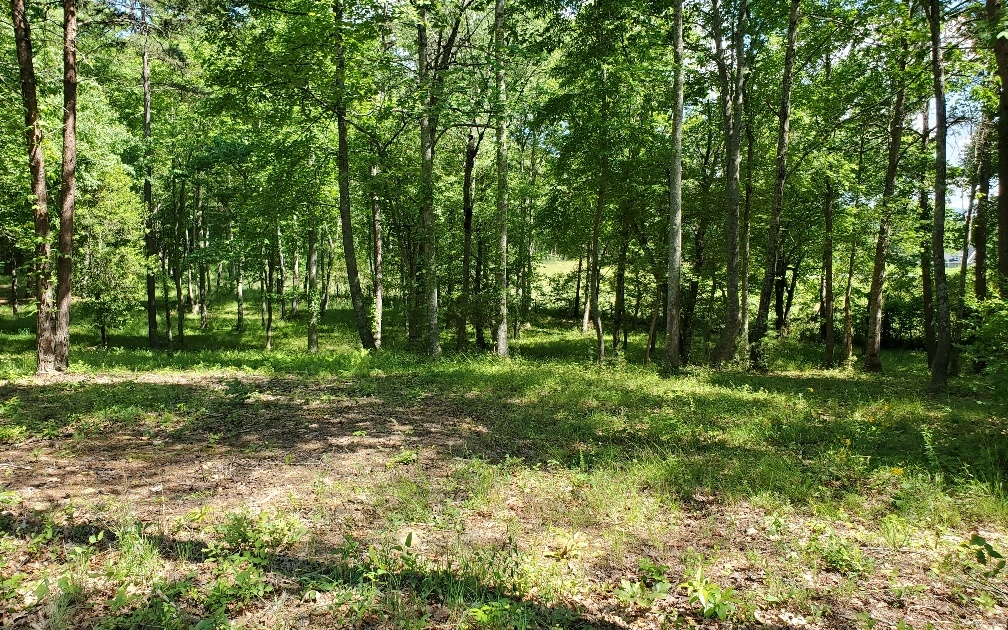 297836 Blairsville Lake Access Lot