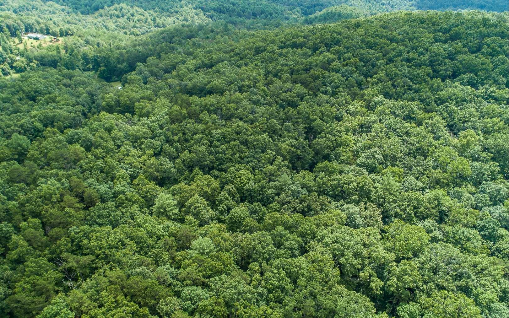 311444 Mineral Bluff