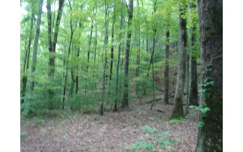 231852 Blairsville Vacant Lot