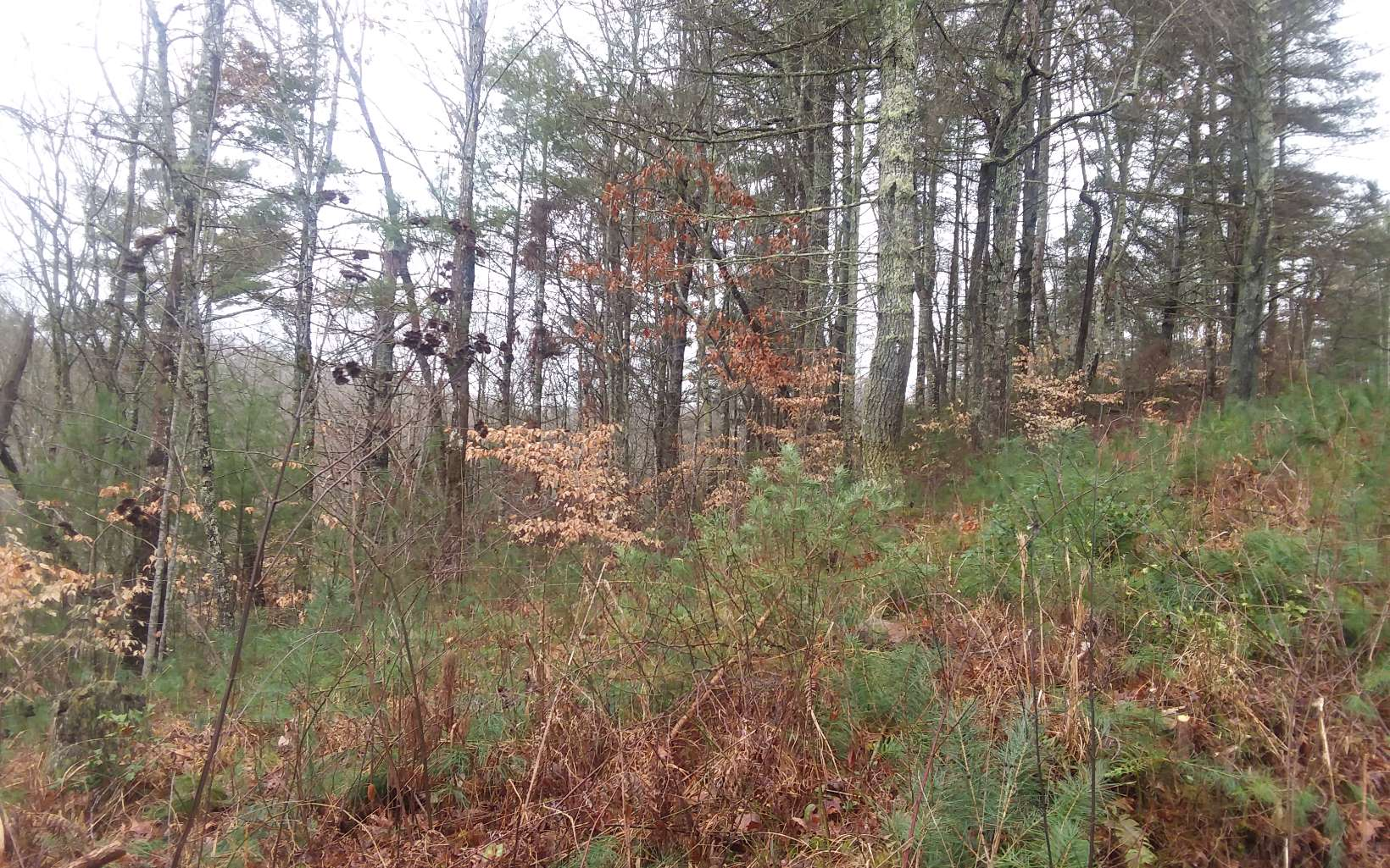 295153 Morganton Vacant Lot