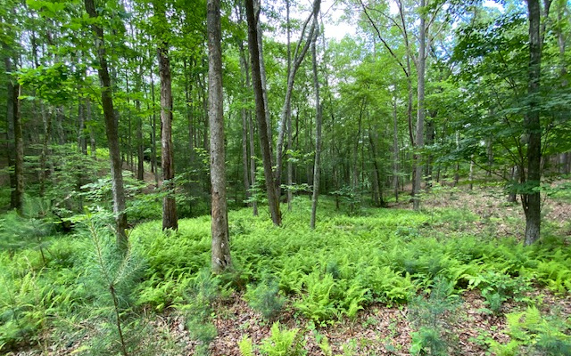 298954 Blairsville Vacant Lot