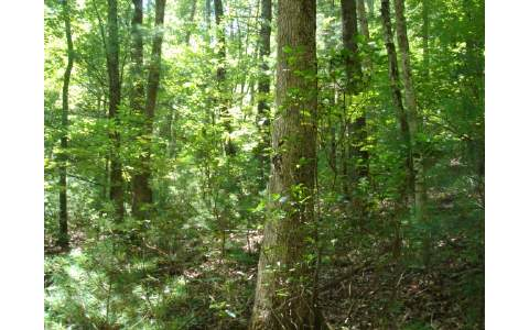 231855 Blairsville Vacant Lot
