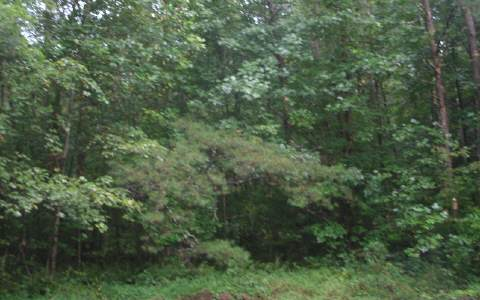 233855 Ellijay Vacant Lot
