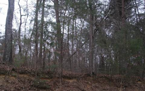 235463 Ellijay Vacant Lot
