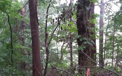230964 Ellijay Vacant Lot