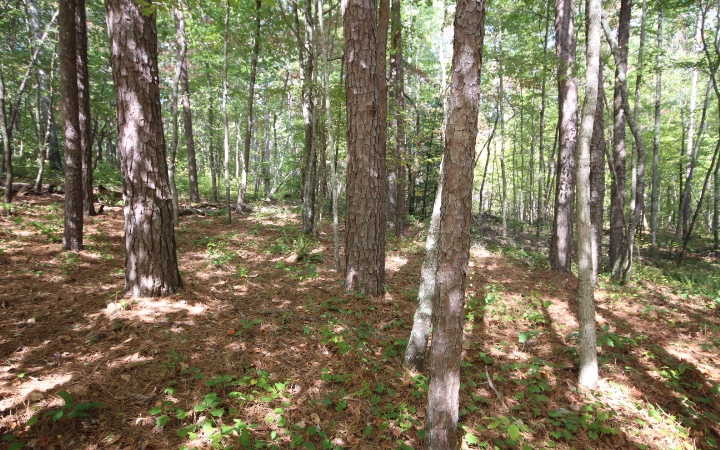 292465 ELLIJAY Lake Access Lot