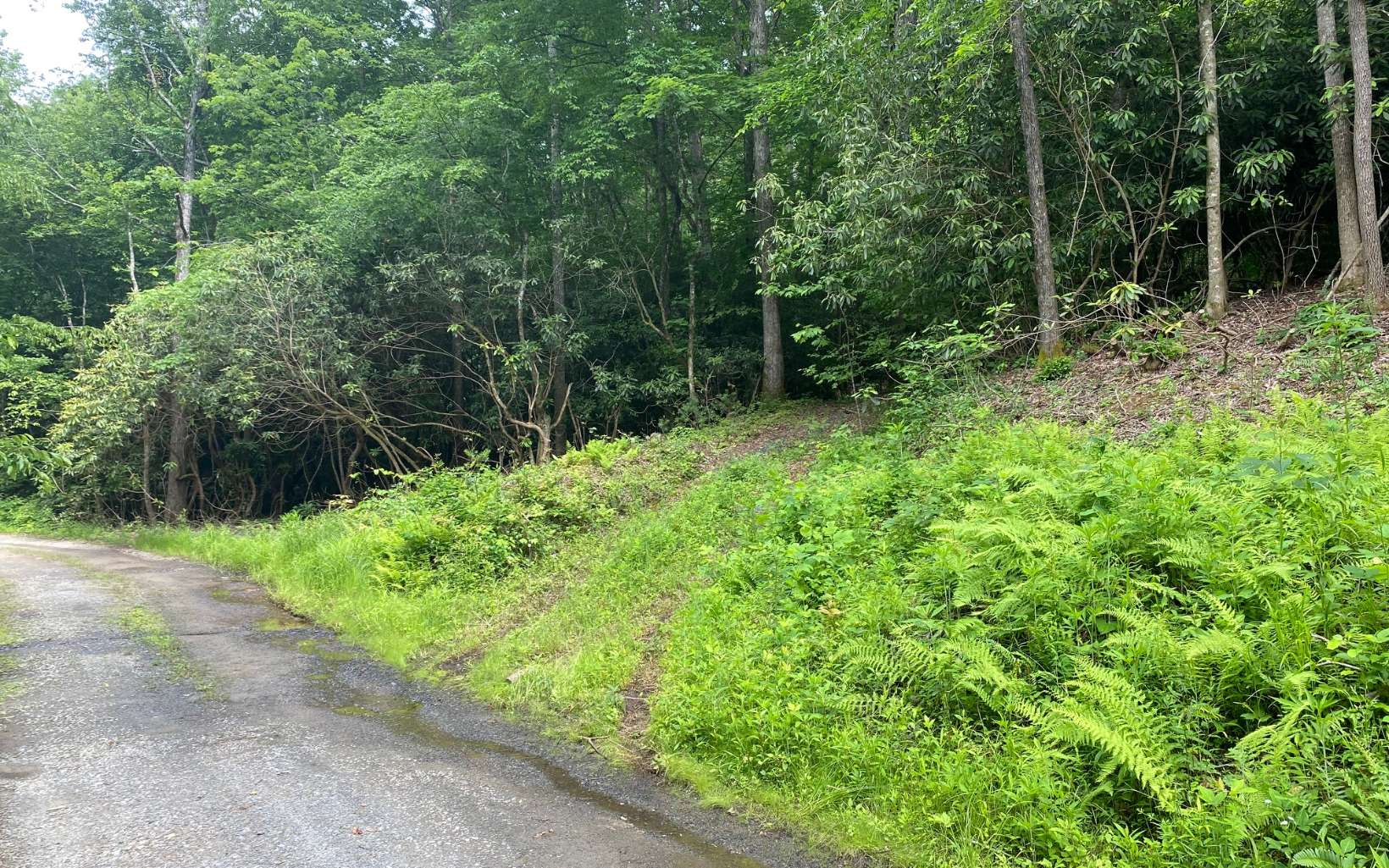 297969 Mineral Bluff Vacant Lot