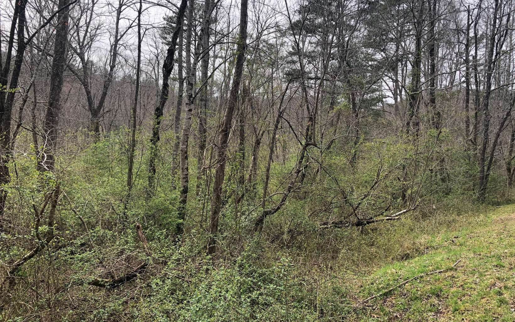 286370 Blairsville Vacant Lot