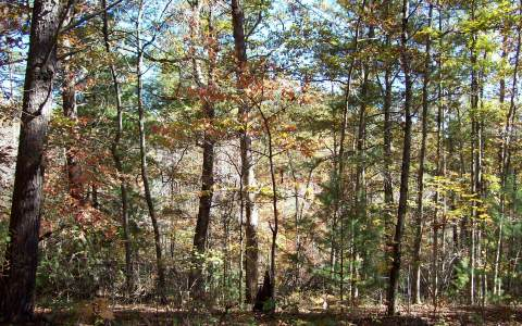 224071 Morganton Vacant Lot