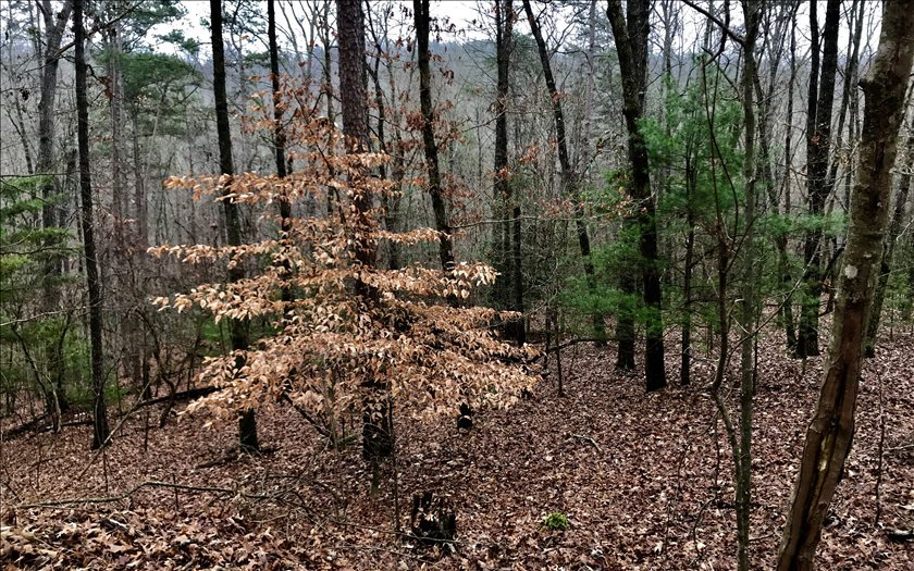 274073 Ellijay Vacant Lot
