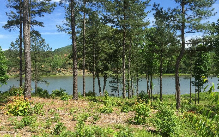 251575 Blairsvile Lake Front Lot
