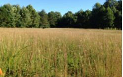 253375 Blairsville Commercial Lot