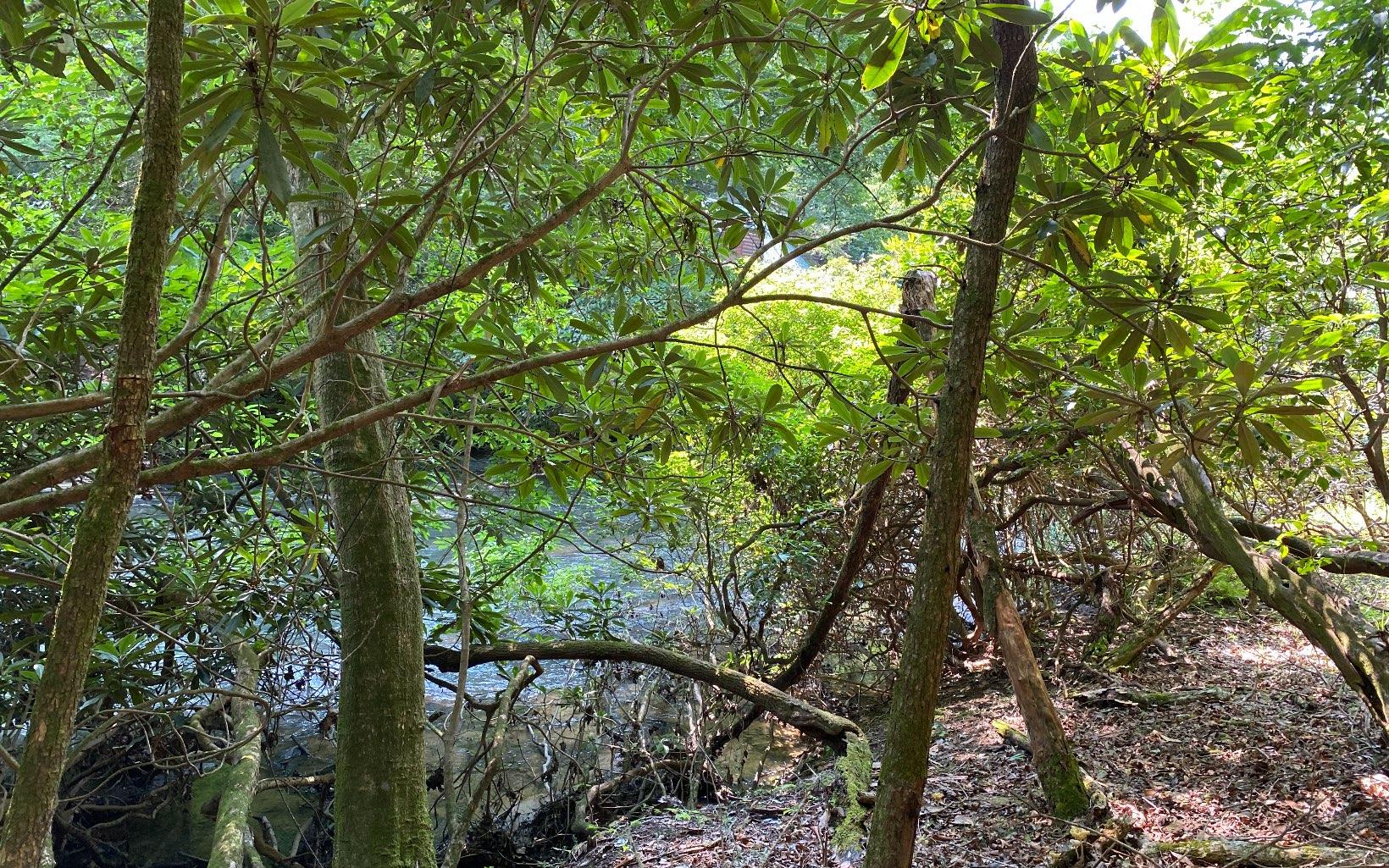 308475 Ellijay River Front