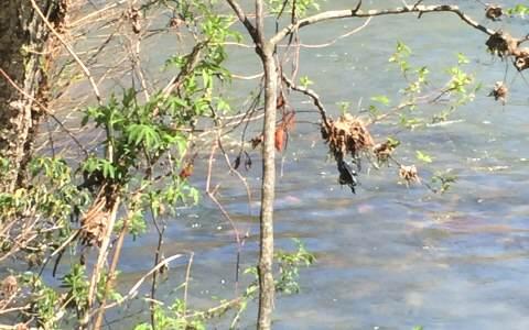 271076 Ellijay River Front