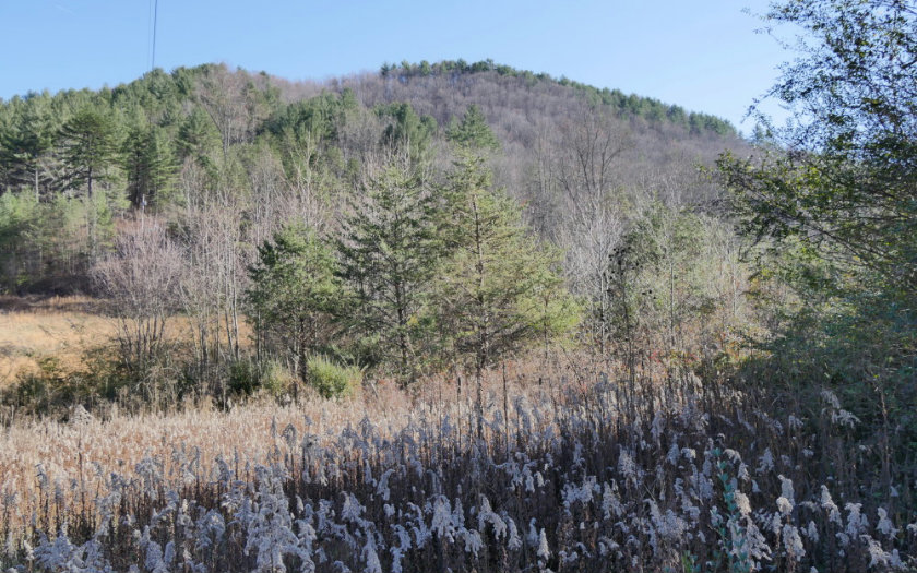 263977 Blairsville Vacant Lot