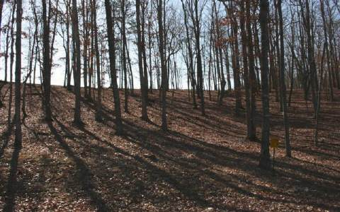 275679 Blairsville Vacant Lot
