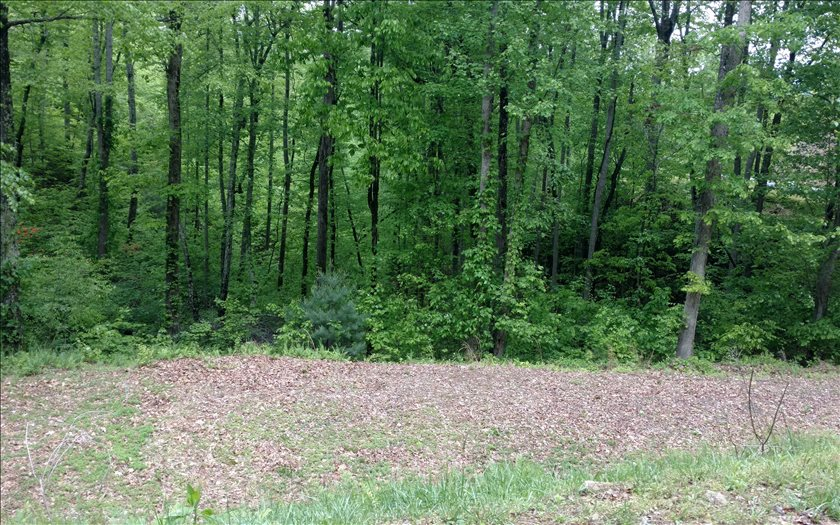 267481 Brasstown Vacant Lot