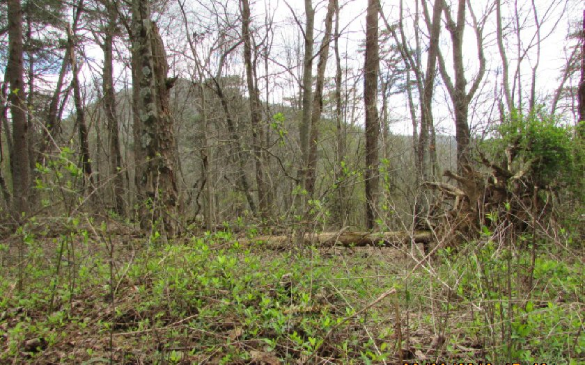276081 Ellijay Vacant Lot