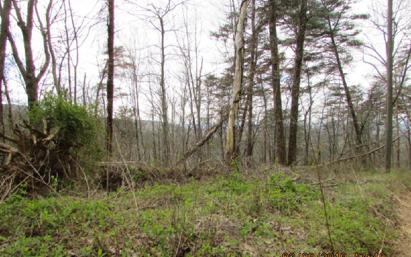 276082 Ellijay Vacant Lot