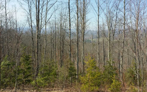 284382 Blairsville Vacant Lot