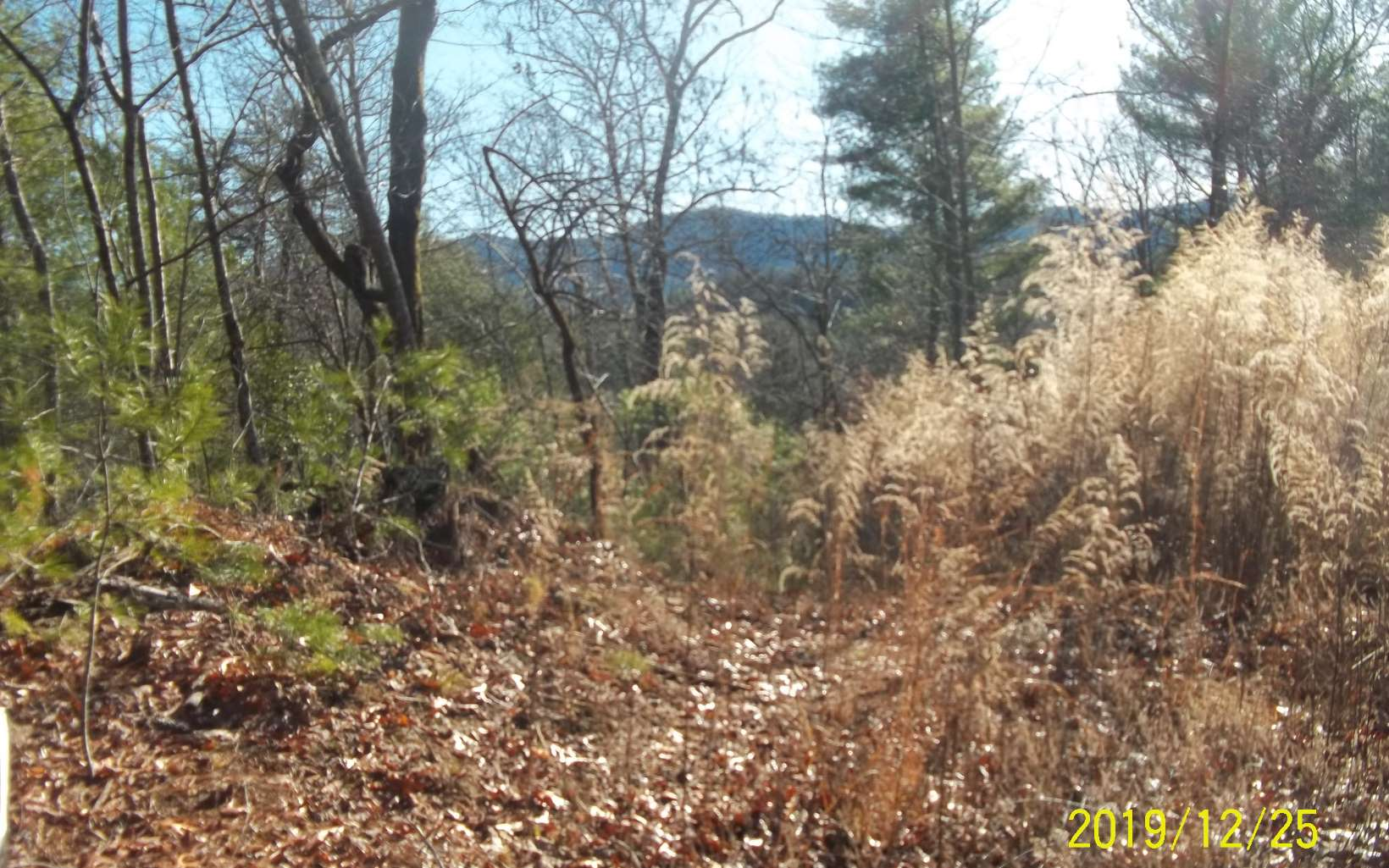 288984 Ellijay Vacant Lot