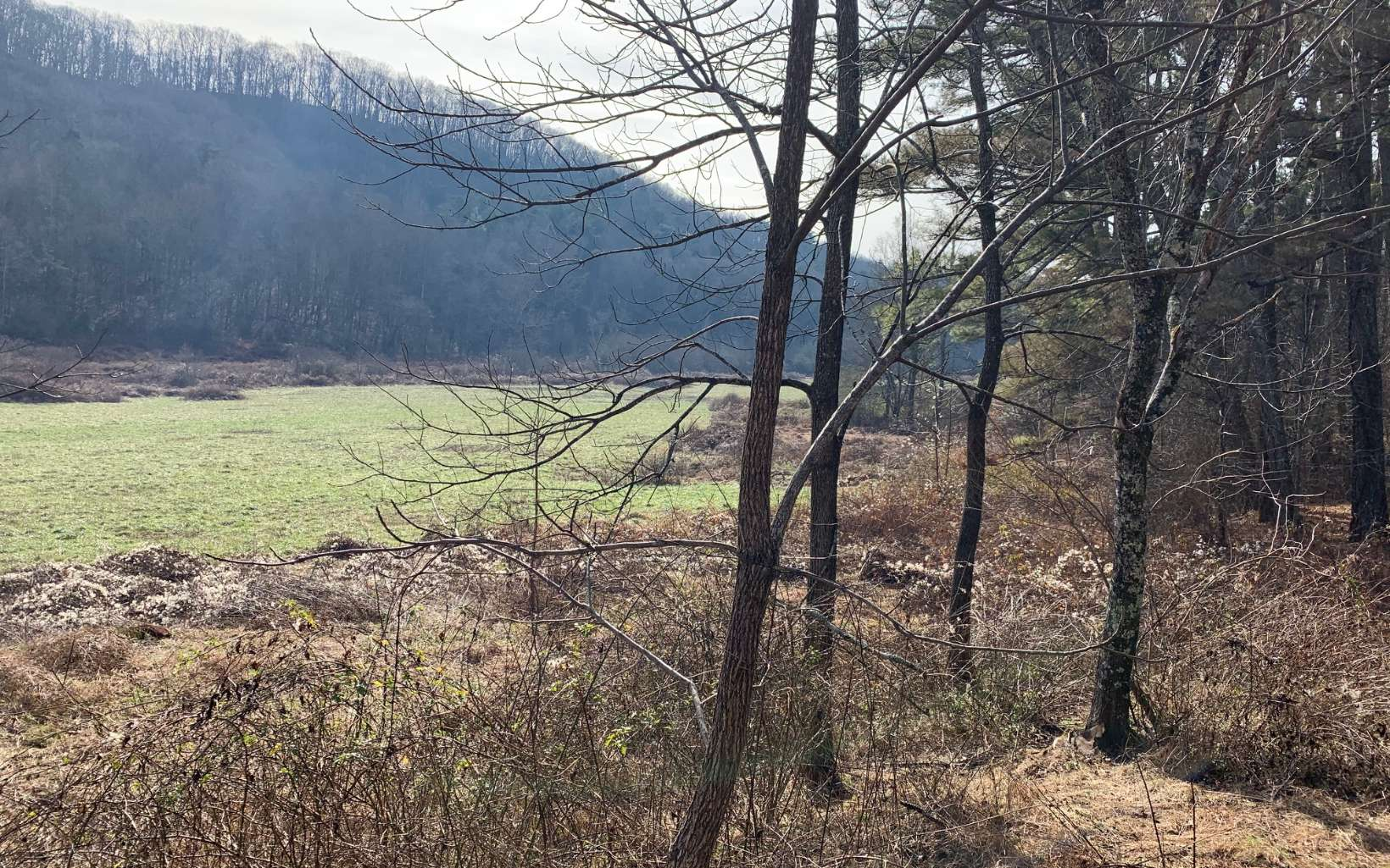 304289 Blue Ridge Acreage